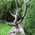 Letošní jelen z říje na Slovensku